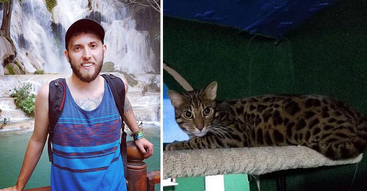 bengal cat room