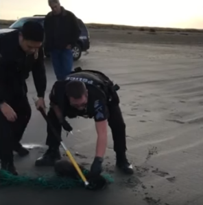 officers hold seal down