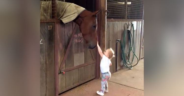 coco horse barn