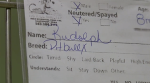 rudolph adoption application