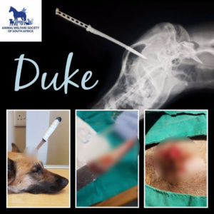 duke's knife wound