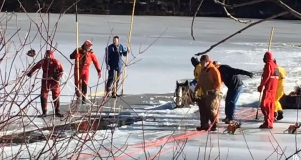 Clydesdales Wilhelm & Gunther Plunge Into Frozen Lake