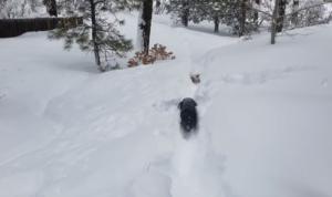 kona leads dog