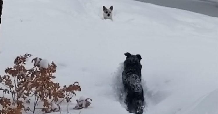 kona snow rescue