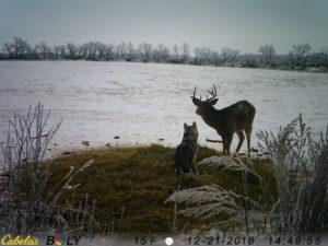 koda and deer