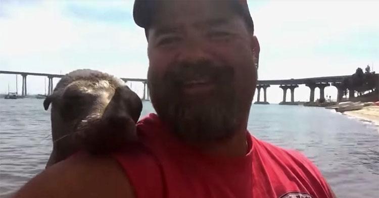 sea lion cuddle