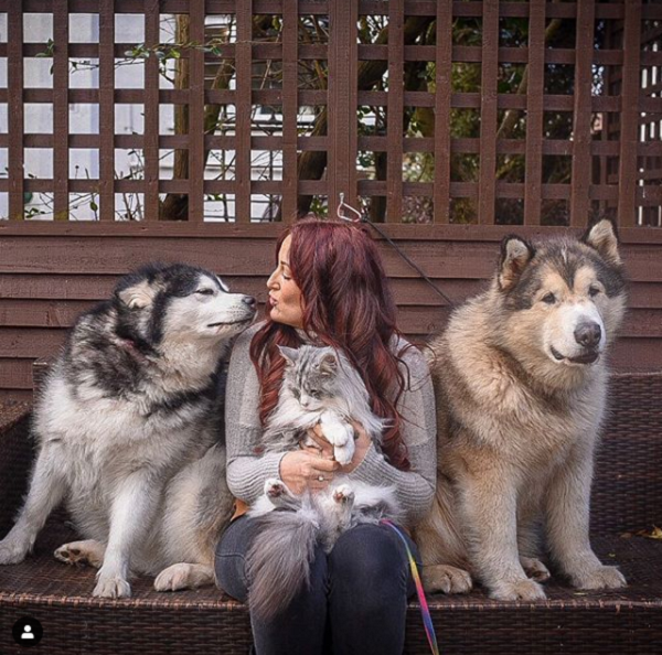 Malamute Dogs Sniff Out Their Grandmother Inspiremore From the popular youtube and instagram page life with malamutes! malamute dogs sniff out their