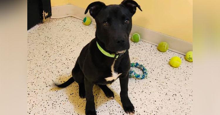 rudolph euthanized puppy