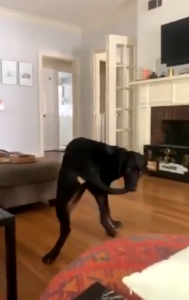 max finally catches tail