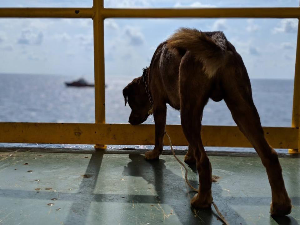 boonrod thai dog