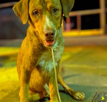 boonrod dog