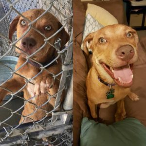 dogs before after adoption