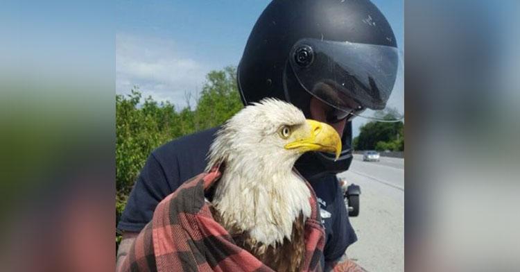 bald eagle rescue