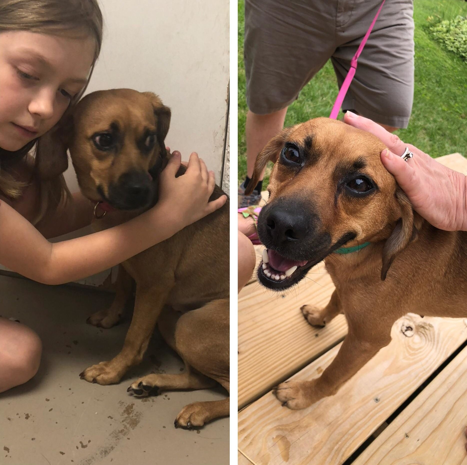 dog rescue before and after