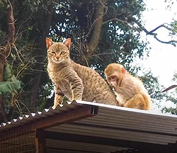 Cat Billo Adopts Injured & Abandoned Monkey Avni. -InspireMore