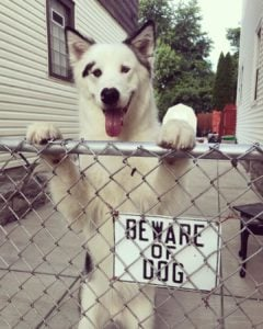 beware cute dogs