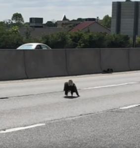 eagle highway