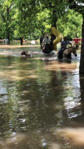 cattle rescue oklahoma flood