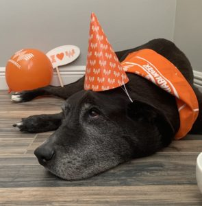 whataburger party dog stitch