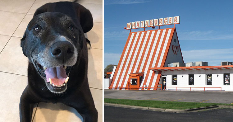 whataburger dog