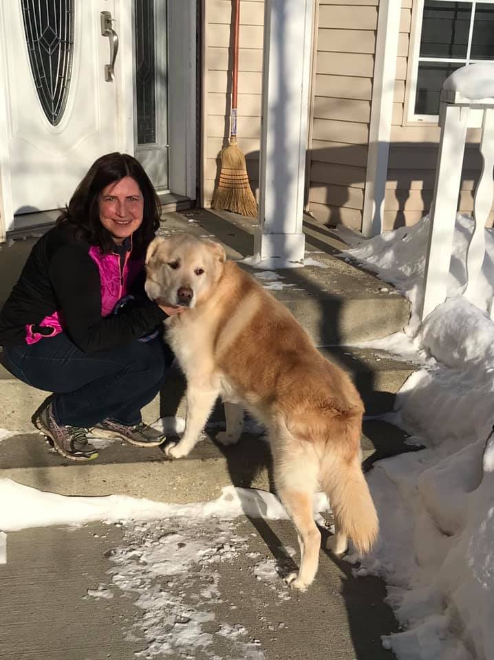 Obese Golden Retriever Gets New Lease On Life After Weight Loss Inspiremore