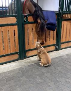 dog horse friends