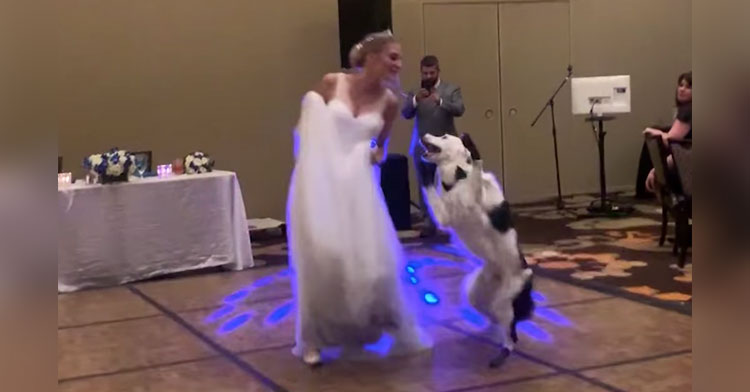 hero sara wedding dance