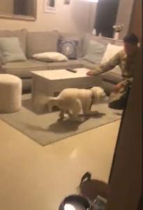 benny runs to dad