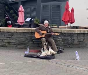 dog street performer nz