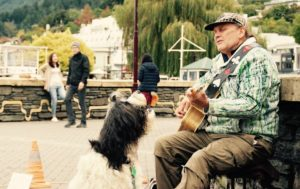 happy the singing sheepdog