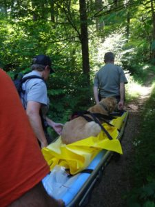 dog on stretcher