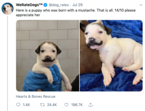 we rate dogs mustache puppy