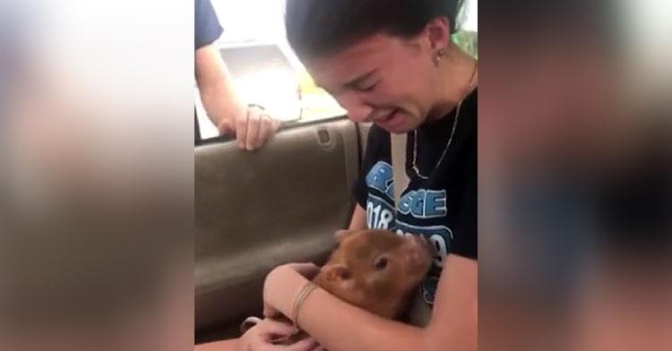 piglet pet surprise