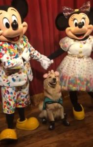 nala meets mickey and minnie