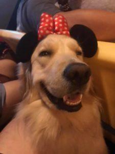 nala cute service dog