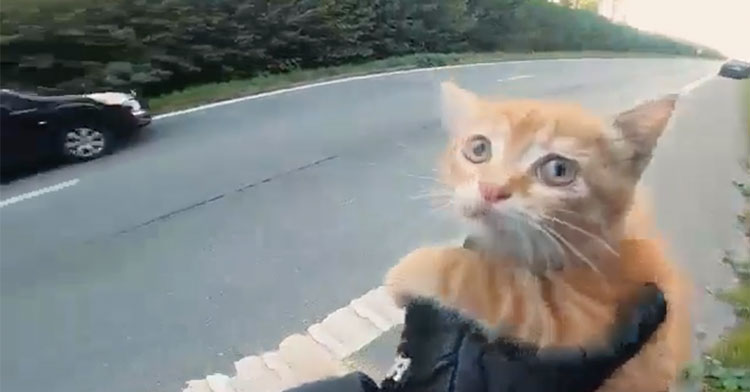 Strangers Pull Over To Save Kitten In Middle Of Street