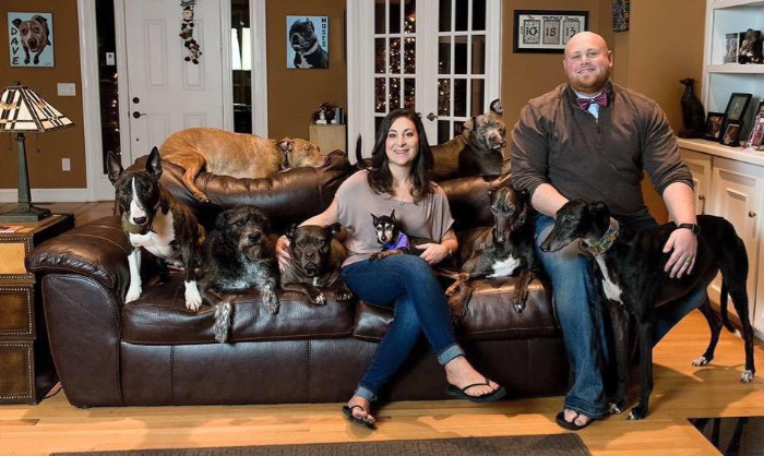 Animal Rescuers Show How They Corral All 17 Dogs Into Adorable Family Photo.