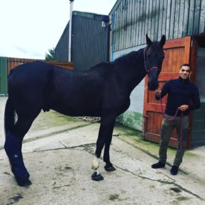 ezphia and service horse agricola
