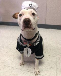 molly in sailor costume