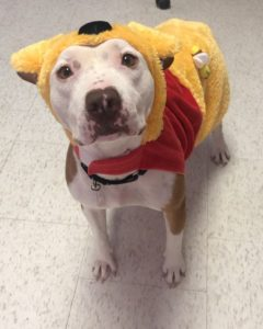 molly in pooh bear costume