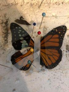 butterfly wing transplant