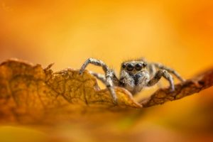 matt doogue spider photo