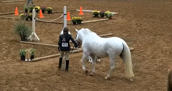 Naughty Pony Eats His Way Through Every Plant On Obstacle Course In Hilarious Video.