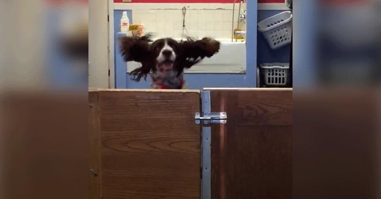 dog at daycare