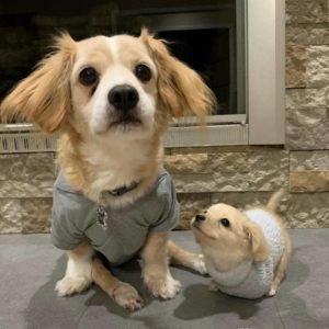 gracie's new brother