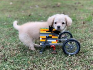 gracie's first lego wheelchair
