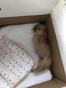 gracie as a puppy