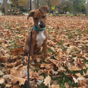 winnie as a puppy