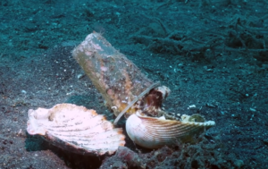 octopus chooses shell