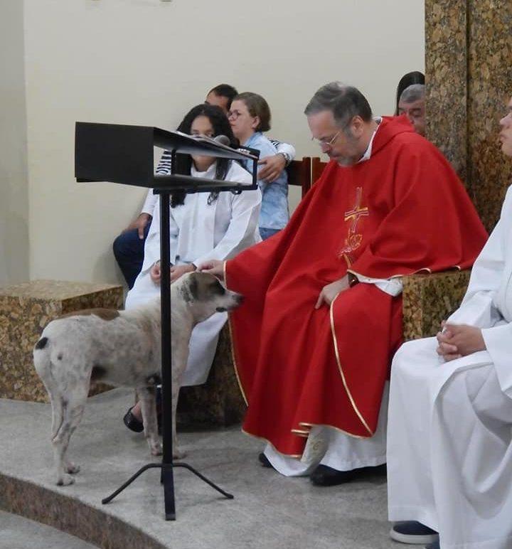 priest stray dogs
